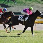 【グラおた第14号】ミエノワンダー、プリンシパルS2着/地方馬近況/今週の競走馬登録