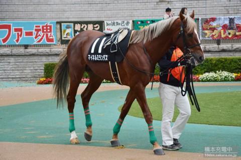 マイネルミランダス 2015/11/23 秋陽ジャンプステークス