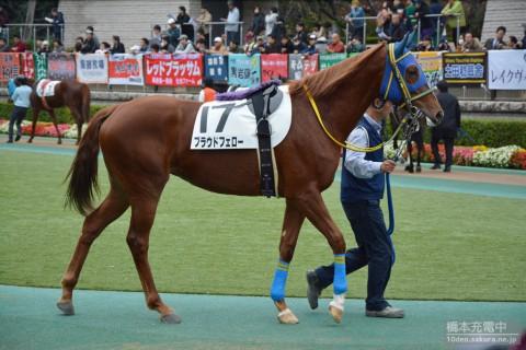 プラウドフェロー 2015/11/23 2歳新馬