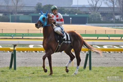 ノースヒーロー 2015/02/07 東京競馬場 ゆりかもめ賞