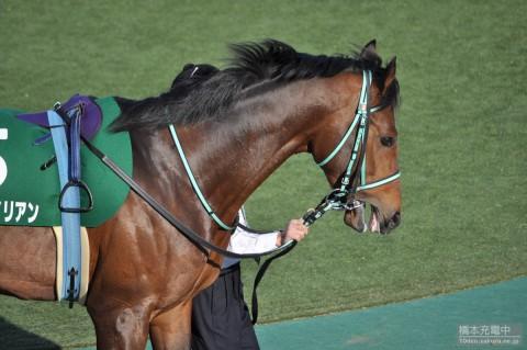 ミュゼエイリアン 2015/02/15 東京競馬場 共同通信杯