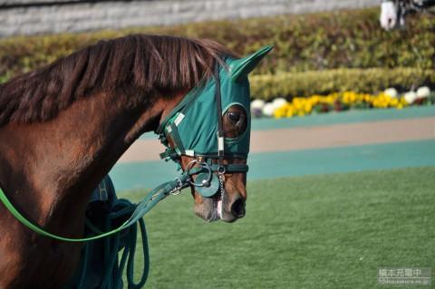 ゴールドシェンロン 2015/02/15 東京競馬場 大島特別