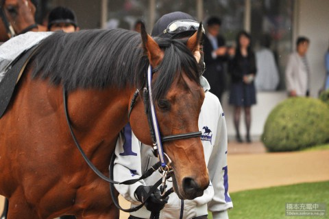 タガノザイオン 2015/04/19 中山競馬場 袖ヶ浦特別