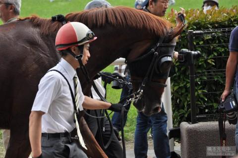 プロトコル 2015/05/24 東京競馬場 立川特別