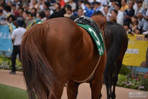 スマートオリオン 2015/09/13 中山競馬場 京成杯オータムハンデ