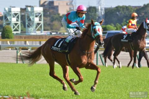 2015/10/25 東京競馬場 くるみ賞