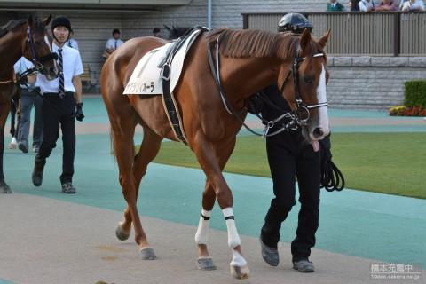 サクラヴィオーラ 2015/10/12 東京競馬場