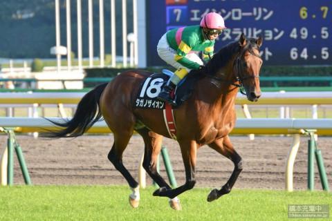 タガノザイオン 2015/10/18 東京競馬場 白秋ステークス