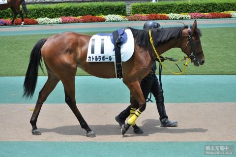 カトルラポール 2015/06/07 東京競馬場