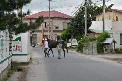 水沢競馬場 馬横断
