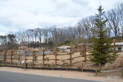 多摩動物公園 モウコノウマ展示スペース