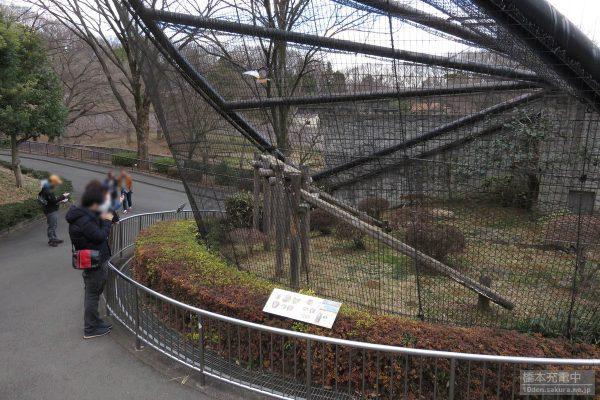 多摩動物公園 サーバルキャット 展示スペース