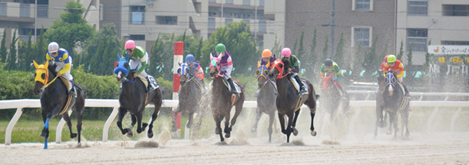 2017夏の中京遠征 名古屋競馬場