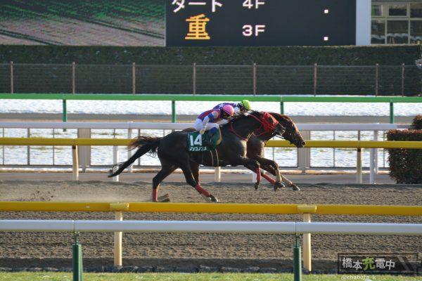 2018/01/28 根岸ステークス