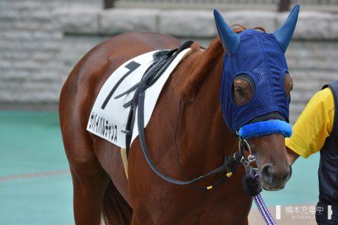 サバイバルチャンス 2016/10/10 東京競馬場