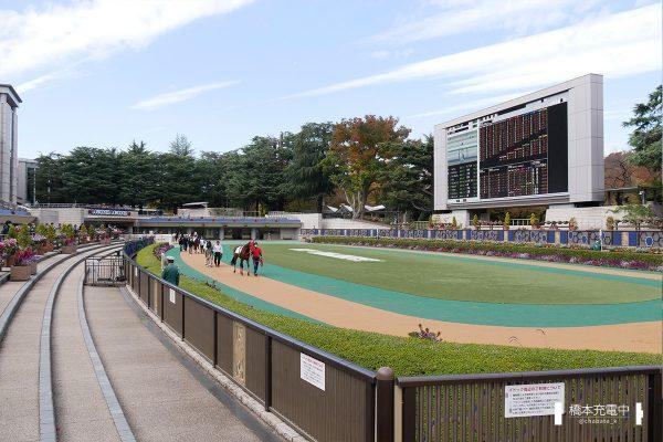 東京競馬場 パドック