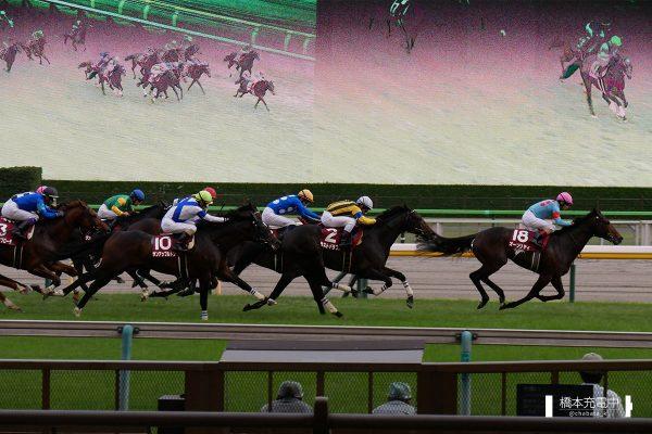 オーソリティ アルゼンチン共和国杯 東京競馬場